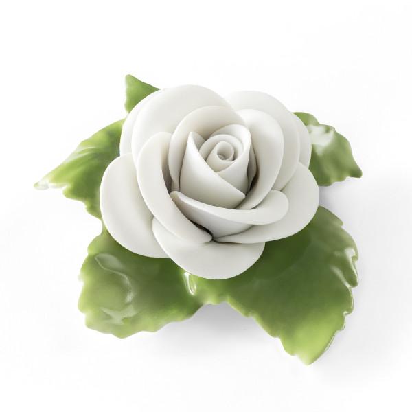Rose (Weiss)